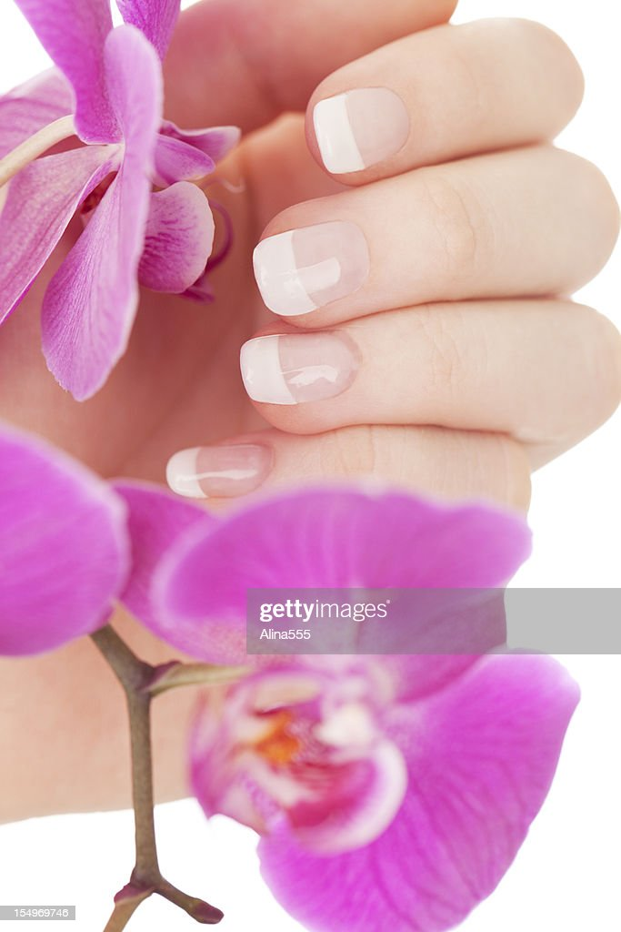 Manicure: beautiful female hands touching orchid flowers : Stock Photo