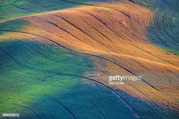 manicured fields - don smith imagens e fotografias de stock