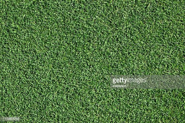 manicured grass