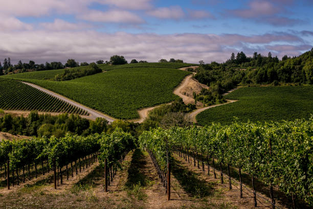 California Wine Producers Expecting Early Grape Harvest