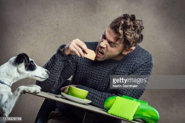 mann mit spitzen zähnen beißt in keks und foxterrier schaut neugierig - ugly dog stock pictures, royalty-free photos & images