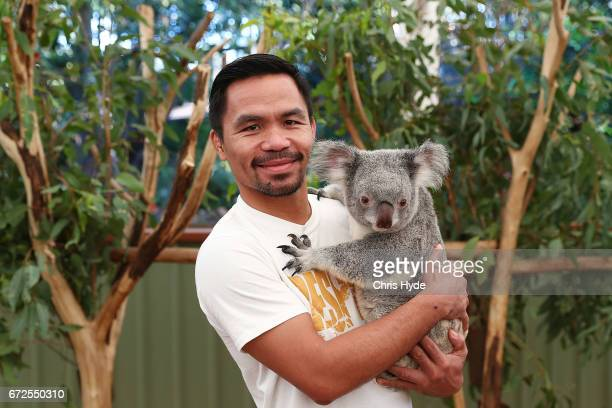 Manny Pacquiao holds Tinkerbell the koala during a visit to Lone Pine Koala Sanctuary Pacquiao is in Australia to promote his upcoming fight with...