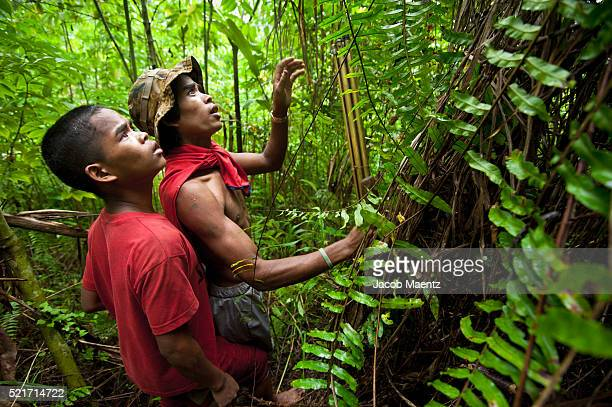 Manobo brothers hunting for birds in the forest