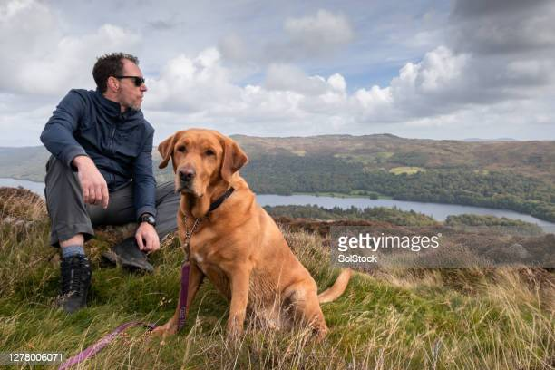 man's best friend - travelstock44 stock pictures, royalty-free photos & images