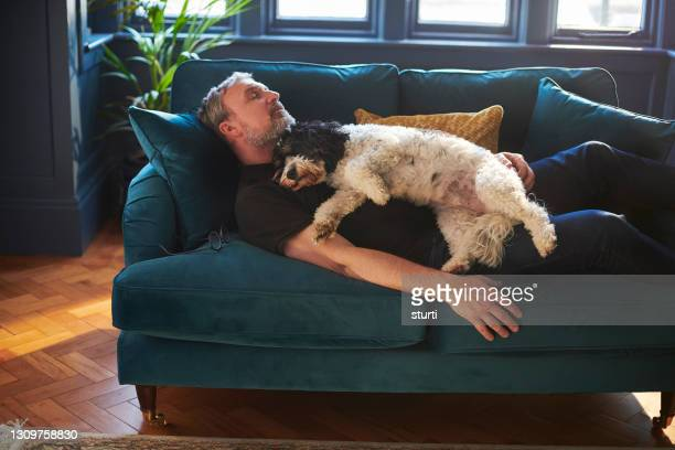 man's best friend - sleeping stock pictures, royalty-free photos & images
