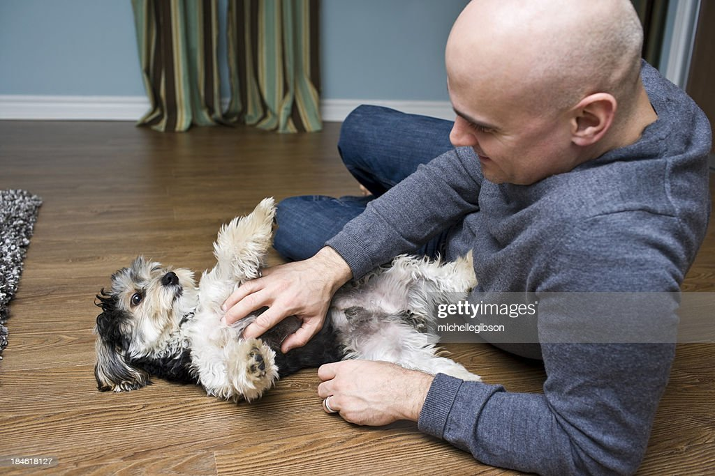 Man's Best Friend : Stock Photo