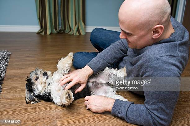 man's best friend - rubbing stock pictures, royalty-free photos & images
