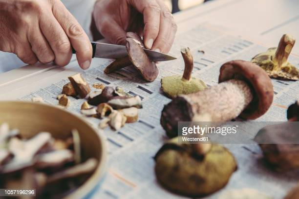 man's hand cutting bay bolete - fungus stock pictures, royalty-free photos & images