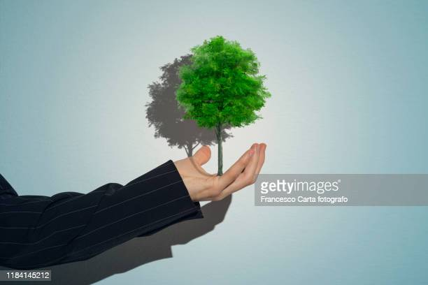 man's hand holding bonsai tree - prosperity stockfoto's en -beelden