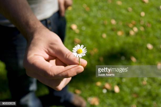 man's hand holding single daisy - single flower stock pictures, royalty-free photos & images