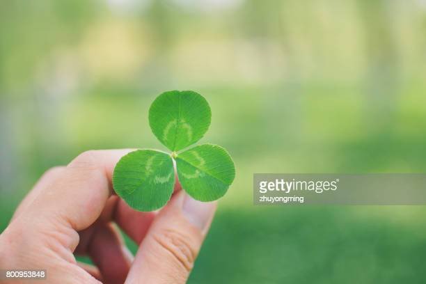 Man's hand holding three leaf clover