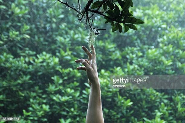 Man's Hand reaching for flower on branch, La Reunion, France