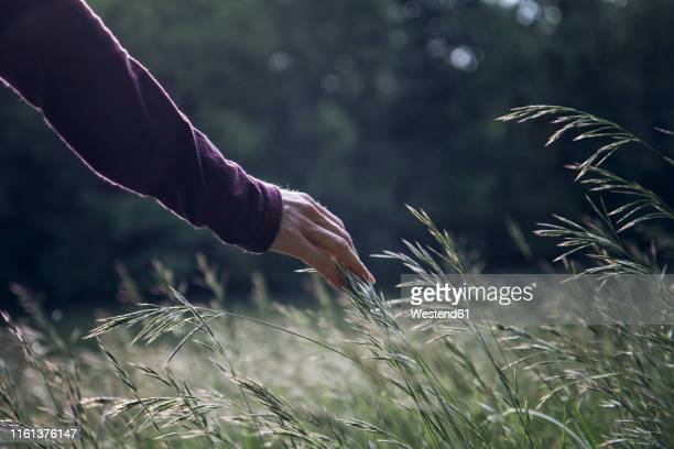 man's hand touching grasses - nature stock-fotos und bilder