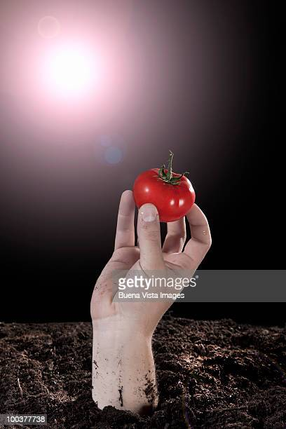Man's hand with tomato