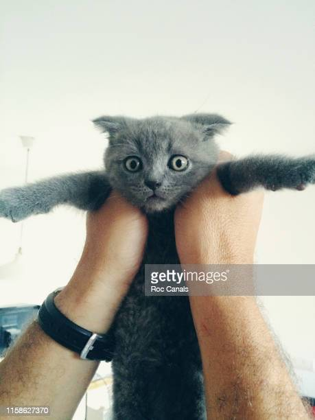 man's hands holding a kitten - meme stock pictures, royalty-free photos & images