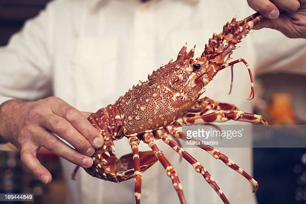 A man's hands holding a lobster