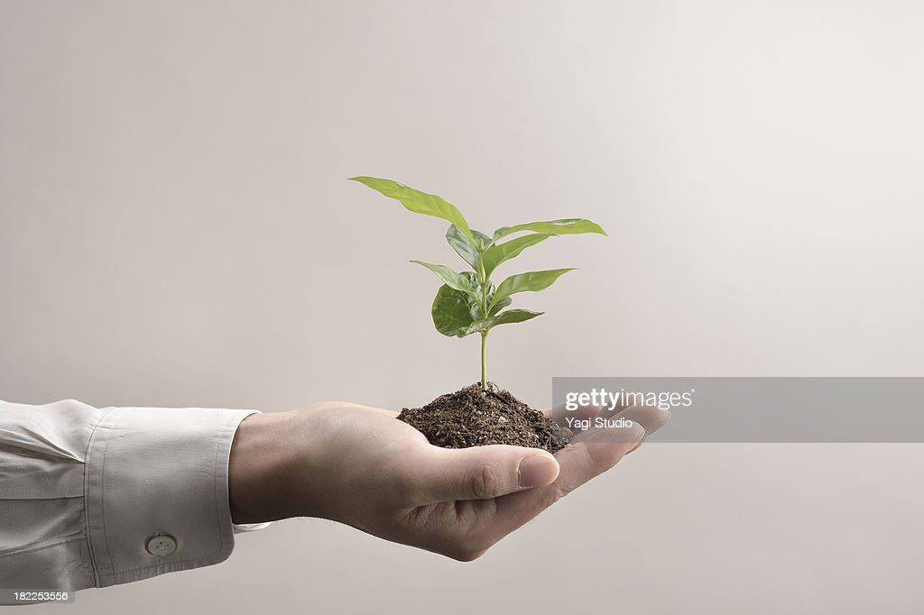 Man's hands holds small green plant seedling : Stock Photo