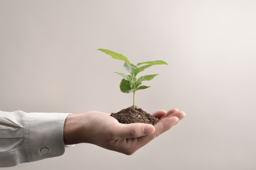Man's hands holds small green plant seedling - gettyimageskorea