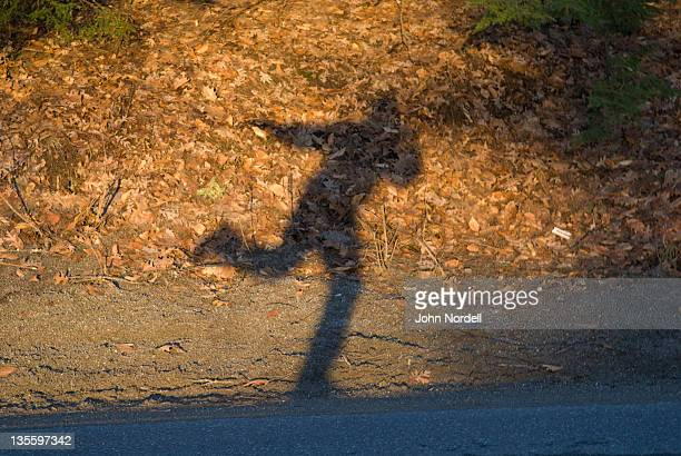 Mans shadow cast on ground during sunrise