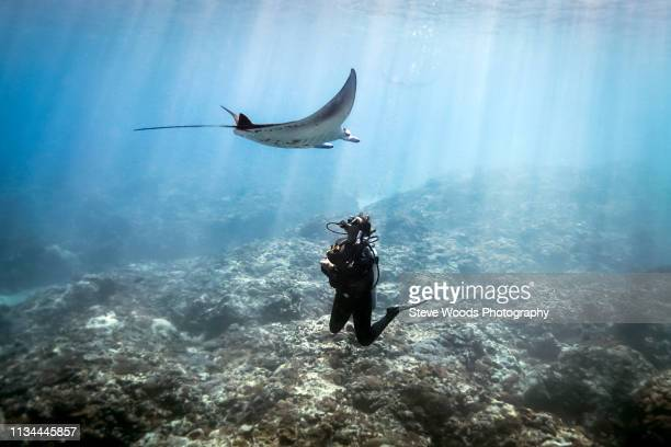 a manta ray (manta alfredi) swimming over a scuba diver , bali, indonesia - underwater diving ストックフォトと画像