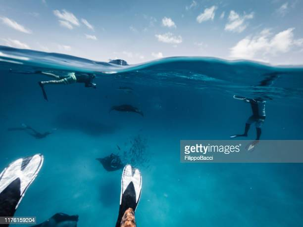 manta rays feeding in the ocean - maldives - plankton stock pictures, royalty-free photos & images