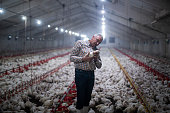 Manual workers in chicken farm.