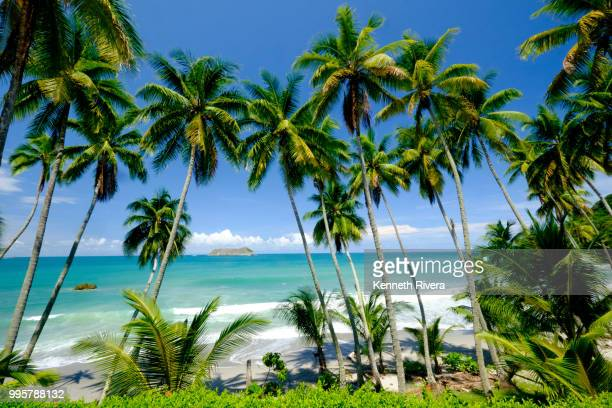 manuel antonio morning - costa rica stock photos and pictures