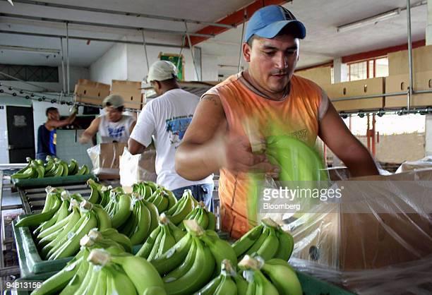 Manuel Arturo Valdez front packages bananas for shipment at the Bella Vista banana plantation in Guayas Ecuador April 26 2005