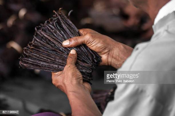 Manufacture of vanilla