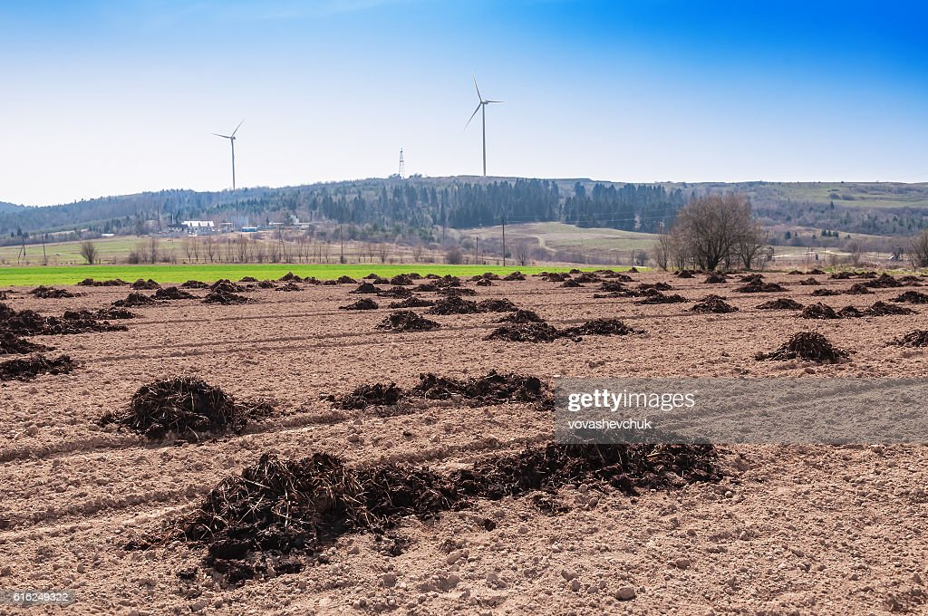 manure on the field : Stock Photo