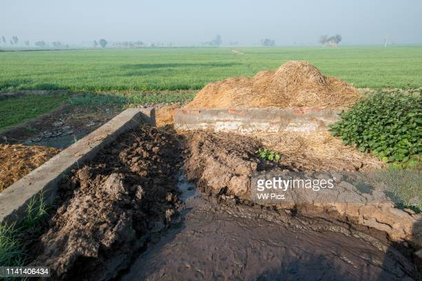 Manure Pit on a pig farm in Punjab, India.