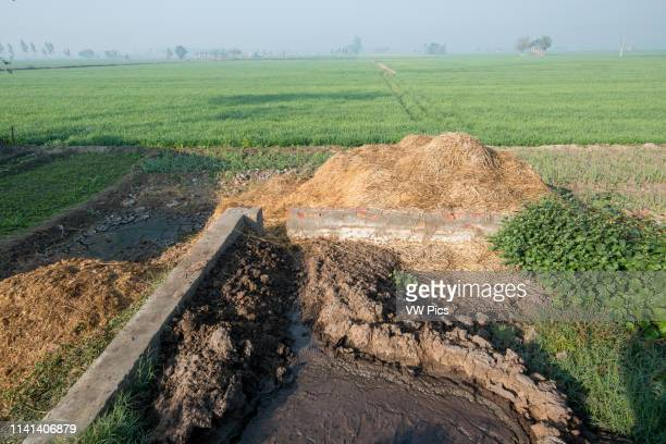 Manure Pit on a pig farm in Punjab India