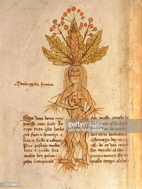 Manuscript Italy 15th century Herbal from Trento Plate Mandragola Femina Mandrake It helps to fight infertility and to conceive baby girls Manuscript...