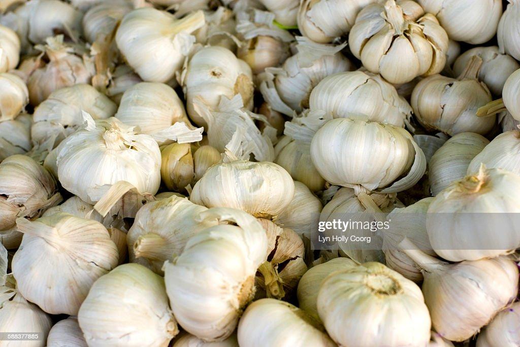 Many bulbs of garlic : Foto de stock