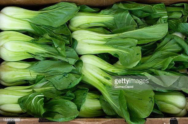 緑豊かなグリーン、オーガニックの白梗菜花輪を列状に並べます。 - 白梗菜 ストックフォトと画像