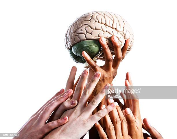 Many hands compete for medical model of human brain