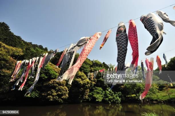 many koinobori, carp streamers flying by breeze in japan - 鯉のぼり ストックフォトと画像