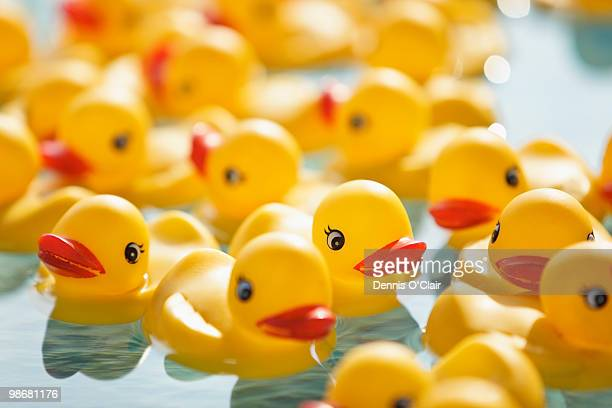 many rubber ducks floating in pool - rubber duck stock pictures, royalty-free photos & images