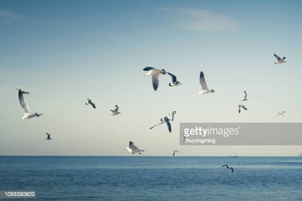 many seagulls in dalian - gaivota imagens e fotografias de stock
