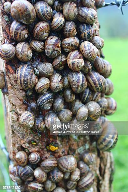 many snails stacked on a wooden post - garden snail stock photos and pictures