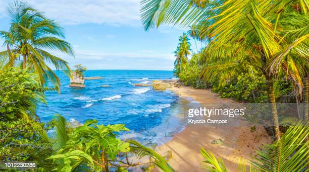 manzanillo beach scenery in south caribbean - costa rica - idyllic stock pictures, royalty-free photos & images