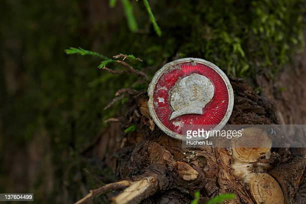 Mao Zedong's badge on a tree