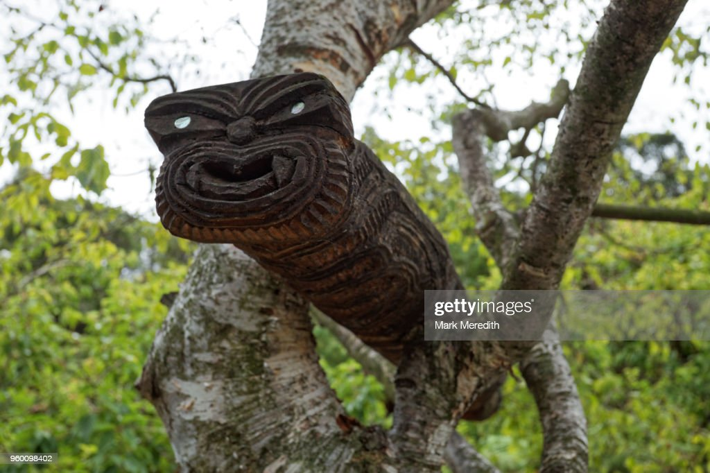Maori carving in a tree at Hells Gate thermal park : Stock-Foto
