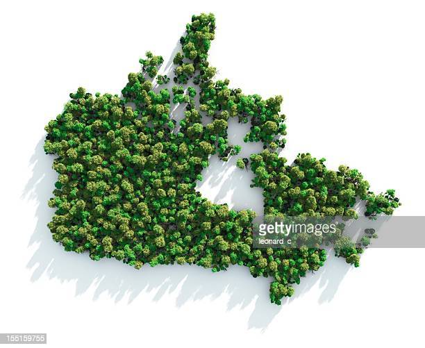 Map of Canada formed by trees on white background