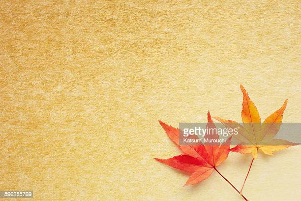 Maple leaf and gold paper texture background