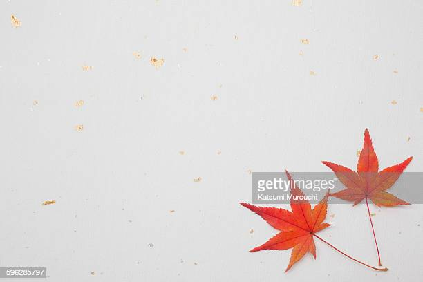 Maple leaf and Japanese paper texture background