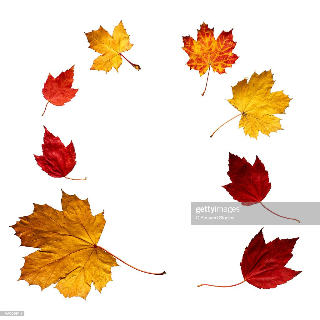 Maple Leaf Frame Stock Photo | Getty Images