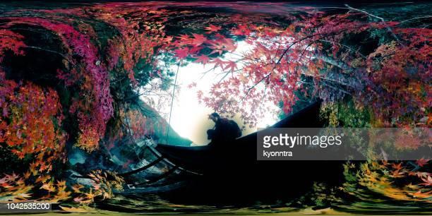日本のカエデの葉 - 全天周パノラマ ストックフォトと画像