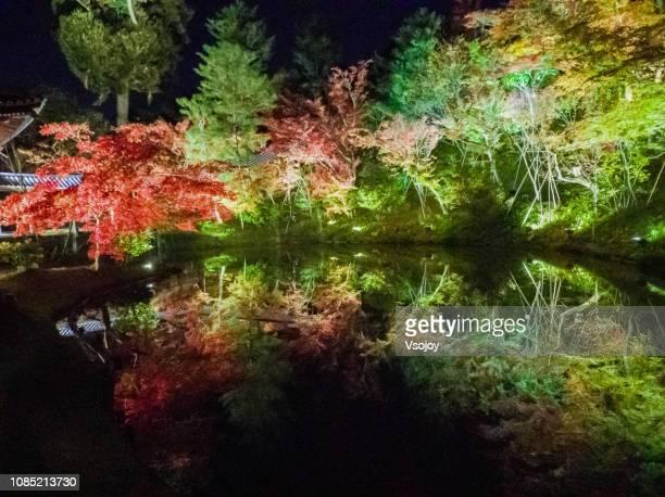 maple leaves and beautiful illumination inside kodai-ji zen temple at night, kyoto, janpan. - vsojoy stock pictures, royalty-free photos & images