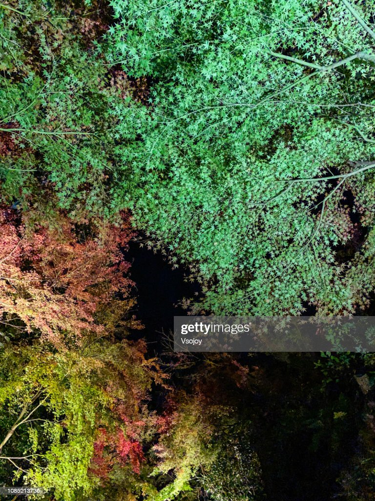 Maple leaves at night in Kyoto, Japan : Stock Photo